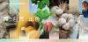 """全棉时代联合COLORO首次发布""""棉""""主题色号,演绎棉的本真之色"""
